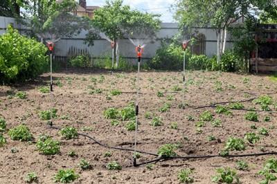 Полив для картофельных полей ЖУК на 100 кв.м. - фото 5673