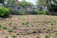 Полив для картофельных полей ЖУК на 100 кв.м.